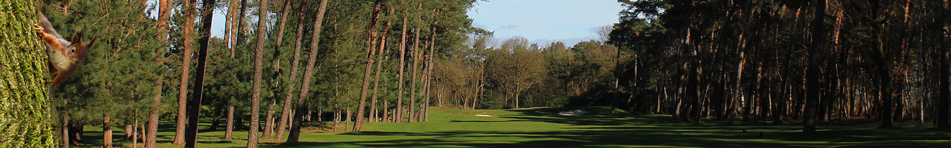 Header-Hole15-Eekhoorn